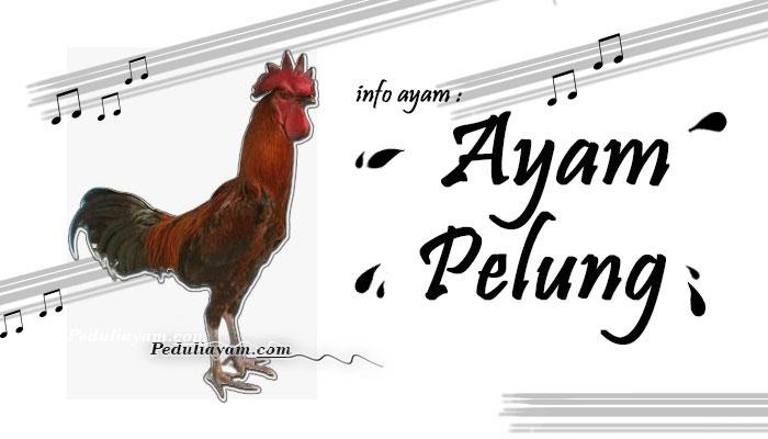 Info Ayam: Ayam Pelung Asli Jawa Barat