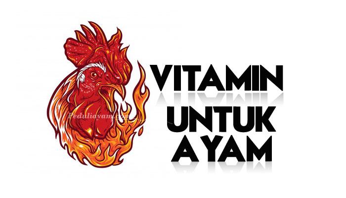 Tips Tepat Merawat Ayam Yang Baru Menetas
