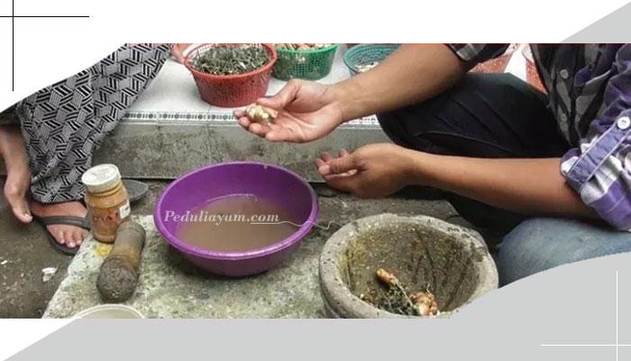 Pil Ramuan Herbal Untuk Ayam Laga Rahasia Botoh Thailand
