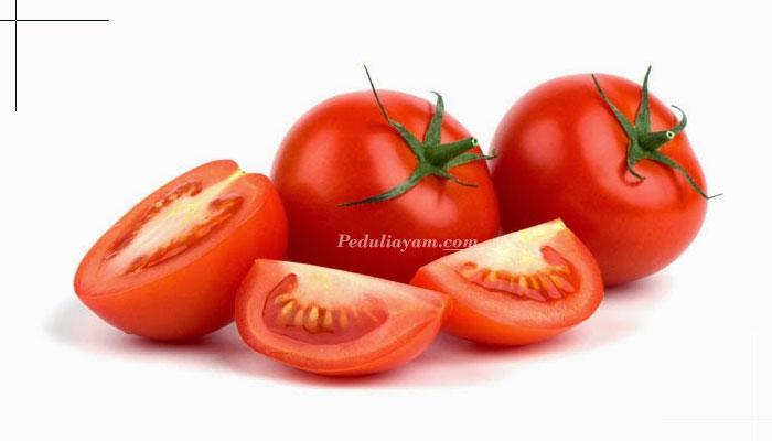 Terbukti! Inilah Manfaat Buah Tomat Untuk Ayam Laga