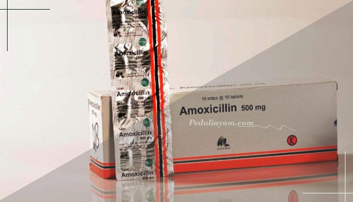Berbagai Manfaat Obat Amoxicillin Untuk Ayam Aduan