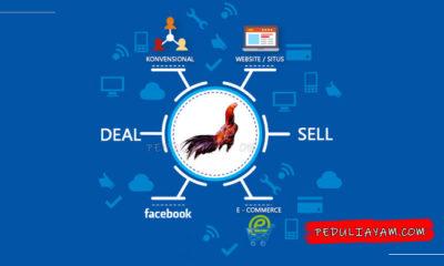 Tips Bisnis Ayam Bangkok Dan Cara Pemasarannya Gan