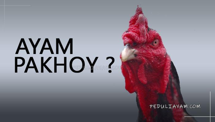 Inilah Kelebihan Ayam Bangkok Pakhoy Sudah Tahu?