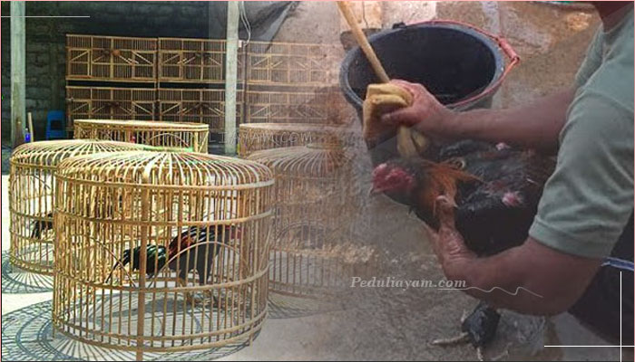 3 Langkah Membuat Ayam Bangkok Lebih Ganas Dari Biasanya