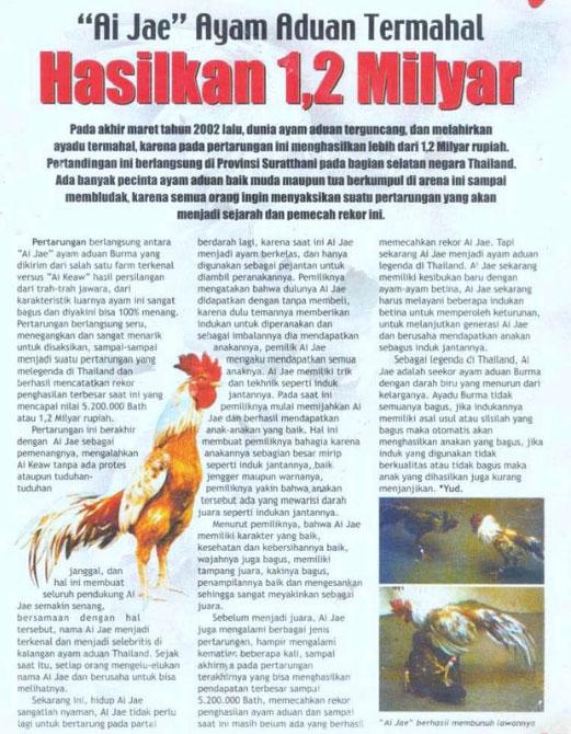 Beli Ayam Bangkok Langsung Dari Thailand? Untung Atau Rugi?