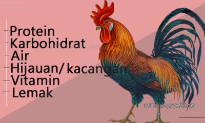 Kandungan Penting Yang Harus Terdapat Pada Pakan Ayam
