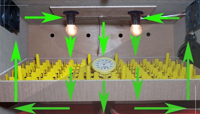 Langkah Mudah Buat Penetas Telur Ayam Otomatis