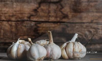 6 Manfaat Bawang Putih Untuk Ayam Aduan