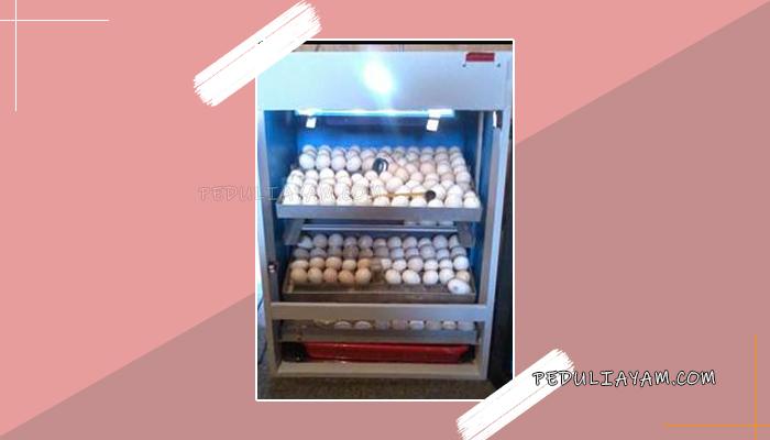 Langkah Membuat Mesin Tetas Ayam Nikelin