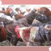 Langkah Ternak Ayam Kampung Untuk Awam