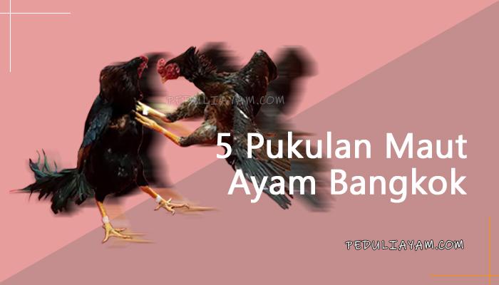 5 Jenis Pukulan Maut Ayam Bangkok, Wajib Tahu!