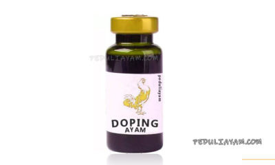 Ketahui Efek Samping Doping Ayam Berbahan Kimia