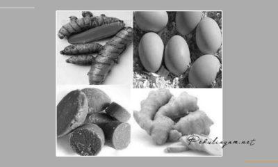 Langkah-Praktis-Membuat-Jamu-Herbal-Untuk-Ayam-Aduan