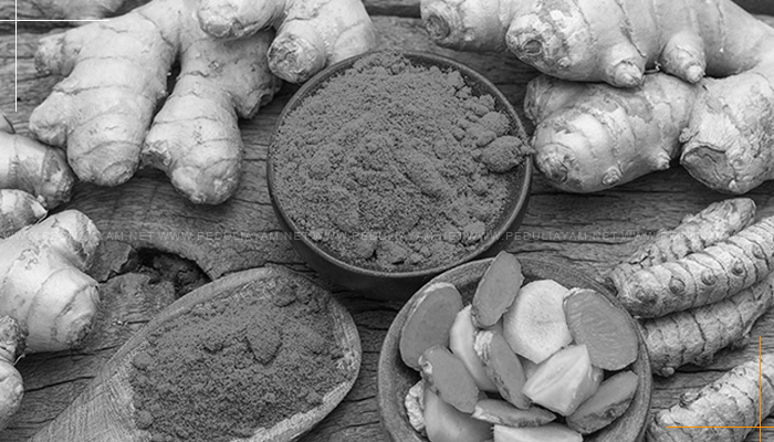 10 Jenis Tanaman Herbal Yang Berguna Untuk Ayam Laga